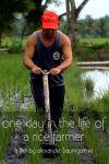 O zi din viața unui cultivator de orez