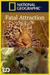 Atracție fatală