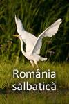 România sălbatică: Țara urșilor și a lupilor