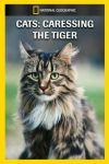 Pisicile - Acești tigri mici pe care-i îngrijim