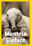 Muntele Elefant